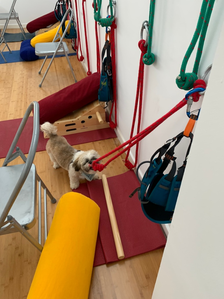 Buddha is checking the Iyengar Yoga ropes at Rayo de la Vida